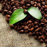 Best Organic Espresso Beans [Buying Guide]